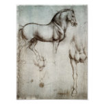 Study of Horses Poster