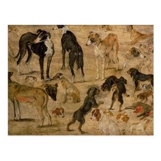 Study of Hounds, 1616 Postcard