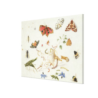 Study of Insects and Flowers Gallery Wrap Canvas
