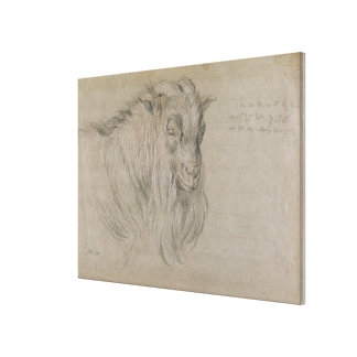 Study of the Head of a Ram (black, sanguine & whit Stretched Canvas Print