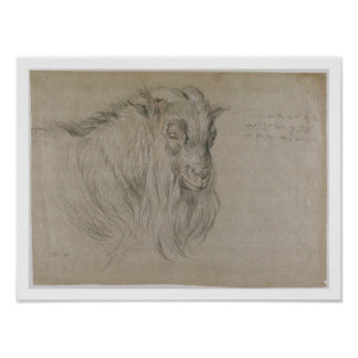 Study of the Head of a Ram (black, sanguine & whit Poster