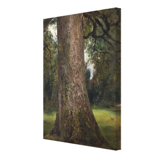 Study of the Trunk of an Elm Tree, c.1821 (oil on Canvas Print