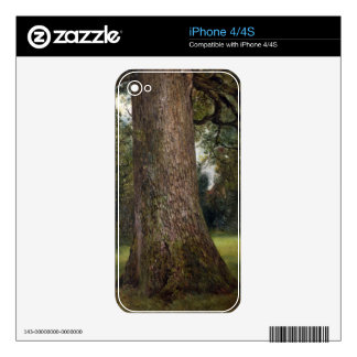 Study of the Trunk of an Elm Tree, c.1821 (oil on Decals For The iPhone 4S