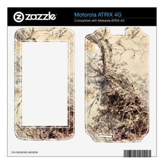 Study of Tree by Paul Rubens Motorola ATRIX 4G Decals