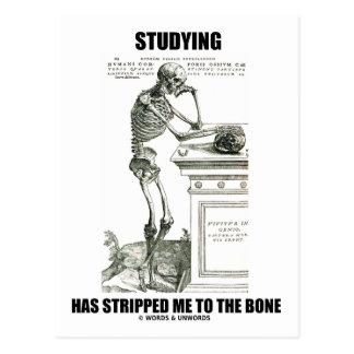 Studying Has Stripped Me To The Bone (Skeleton) Postcard