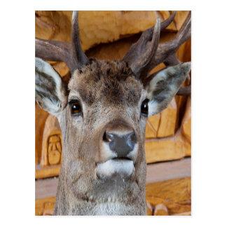 stuffed deer look forward to love and peace postcard