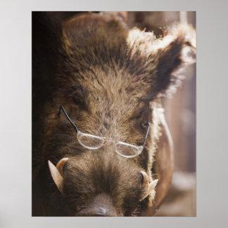 Stuffed Wild Boar Wearing Glasses Outside Poster
