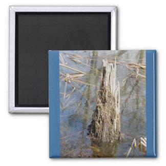 Stump in Pond Magnet