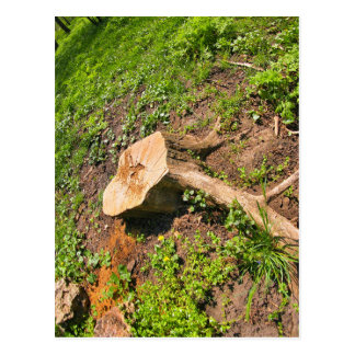 Stump of the cut tree on the edge of the forest postcard