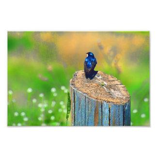 Stump Sitter Photo/Print
