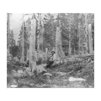 Stumps of Trees Cut down by Donner Party Stretched Canvas Prints