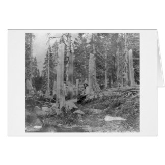 Stumps of Trees Cut down by Donner Party Greeting Card