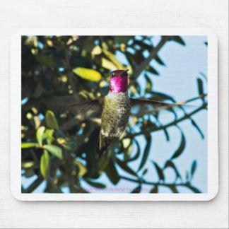 Stunner Hummer Hummingbird Mouse Pad