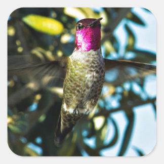 Stunner Hummer Hummingbird Square Sticker