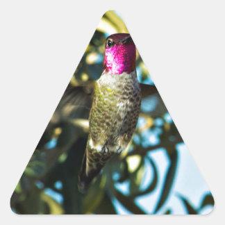 Stunner Hummer Hummingbird Triangle Sticker