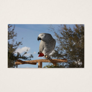 Stunning African Grey Parrot Business Card