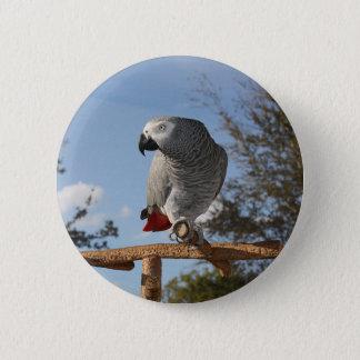 Stunning African Grey Parrot Button