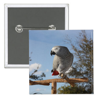 Stunning African Grey Parrot 2 Inch Square Button