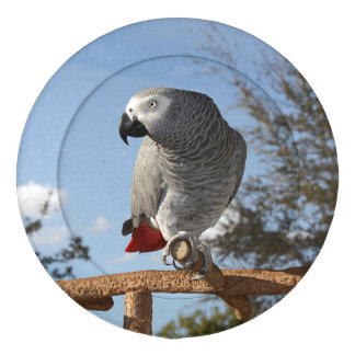 Stunning African Grey Parrot Button Covers