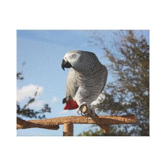 Stunning African Grey Parrot Canvas Print