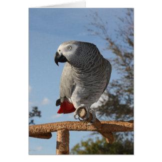 Stunning African Grey Parrot Card
