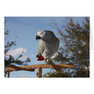 Stunning African Grey Parrot Card
