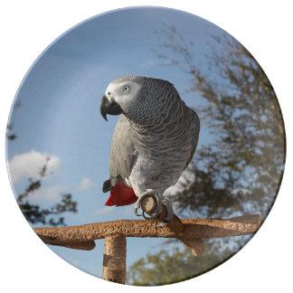 Stunning African Grey Parrot Dinner Plate