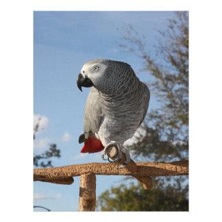 Stunning African Grey Parrot Letterhead