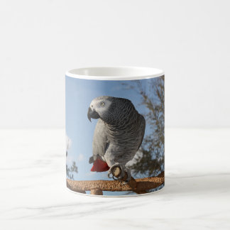 Stunning African Grey Parrot Magic Mug