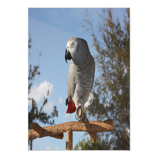 Stunning African Grey Parrot Magnetic Card