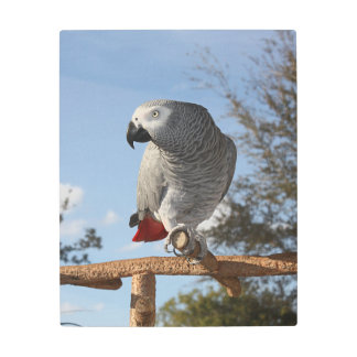 Stunning African Grey Parrot Metal Photo Print