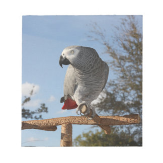 Stunning African Grey Parrot Notepad