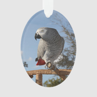 Stunning African Grey Parrot Ornament