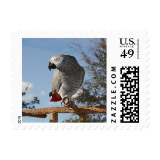 Stunning African Grey Parrot Postage