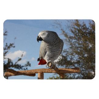 Stunning African Grey Parrot Rectangular Photo Magnet