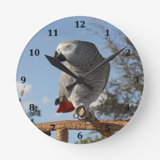 Stunning African Grey Parrot Round Clock