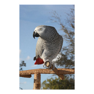 Stunning African Grey Parrot Stationery