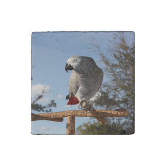 Stunning African Grey Parrot Stone Magnet