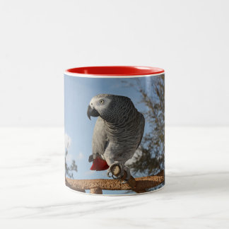 Stunning African Grey Parrot Two-Tone Coffee Mug