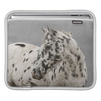 Stunning appaloosa gelding sleeve for iPads