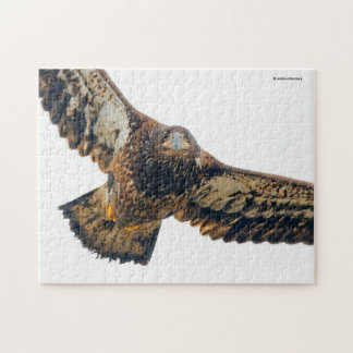 Stunning Bald Eagle Does a Flyover Jigsaw Puzzle