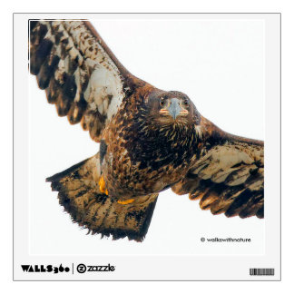 Stunning Bald Eagle Does a Flyover Wall Sticker
