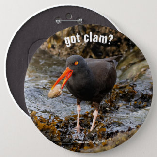 Stunning Black Oystercatcher with Clam Pinback Button