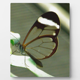 Stunning Brown and Translucent Butterfly Plaques