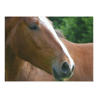 Stunning Brown Thoroughbred Horse Card