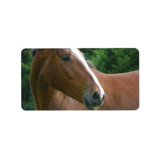 Stunning Brown Thoroughbred Horse Label