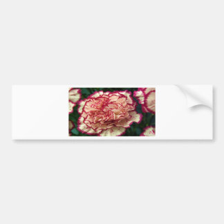 Stunning Carnation Bumper Sticker