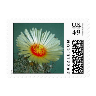 Stunning Castus Flower Small Postage Stamp