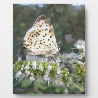 Stunning Cream and Chocolate Butterfly Photo Plaque