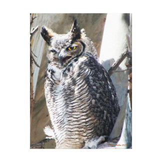 Stunning Custom Great Horned Owl Canvas Print